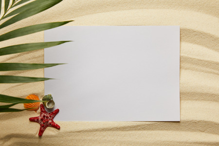 top view of green palm leaf near blank placard, starfish and shells on sand