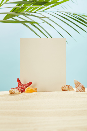selective focus of blank placard, starfish and seashells on sand near green palm leaves on blue