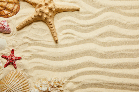 top view of red and yellow starfish, seashells and coral on sandy beach in summertime Stock Photo
