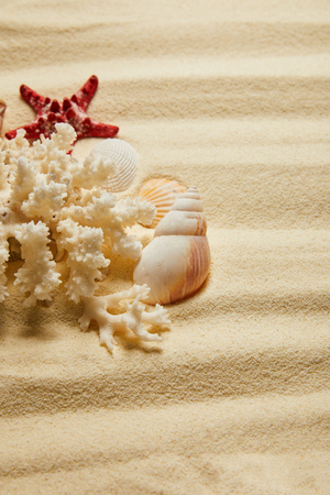 seashells near white coral and starfish on sandy beach in summertime