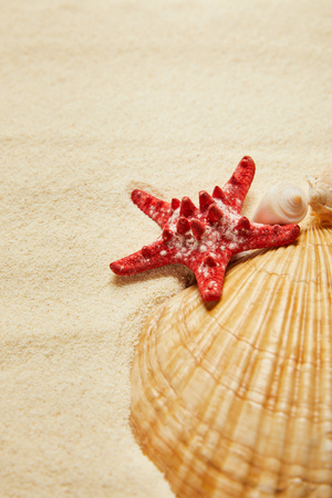 selective focus of red starfish near seashells on beach with golden sand
