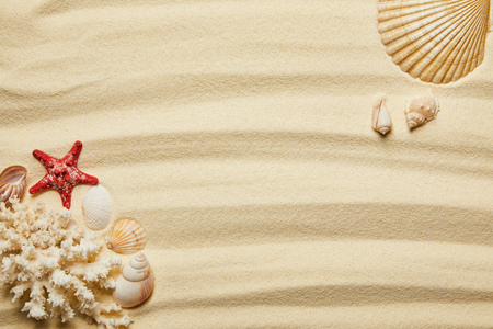 top view of red starfish, seashells and white coral on sandy beach in summertime