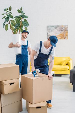 Umzugsfirma, die Pflanze hält und Kollege betrachtet, die einen Karton mit Klebeband in der Wohnung einwickelt