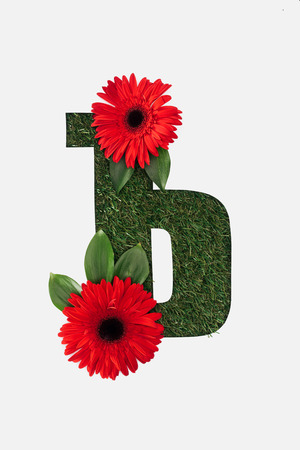 top view of cyrillic letter with natural grass on background and red gerberas with green leaves isolated on white