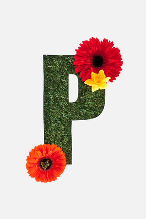 top view of cut out P letter on green grass background with red gerberas and daffodil isolated on white Standard-Bild - 120073799