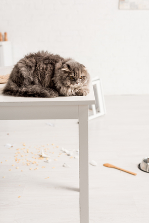 grey and cute cat lying on white table in messy kitchen Foto de archivo - 120076190
