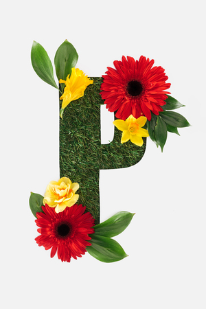 top view of cut out P letter on green grass background with red gerberas, green leaves and daffodils isolated on white Standard-Bild - 120075518
