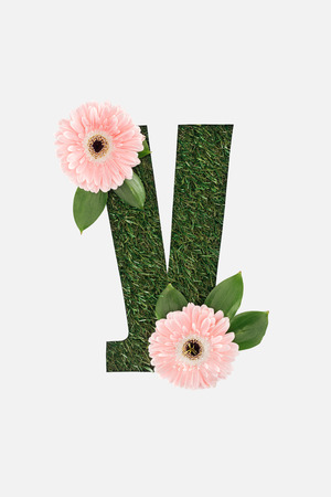 top view of cyrillic letter made of green grass with pink gerberas isolated on white Stock Photo