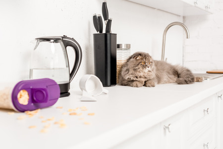 selective focus of cute and grey cat lying on white surface in messy kitchen
