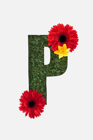 top view of cut out P letter on green grass background with red gerberas and yellow daffodil isolated on white
