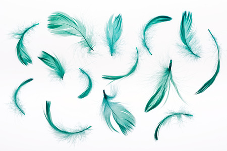 seamless background with green lightweight feathers isolated on white Stock Photo