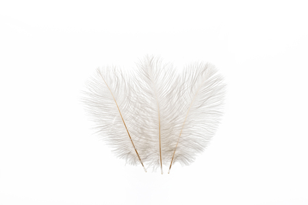 grey fluffy faint three feathers isolated on white Stock Photo