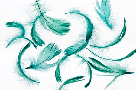 seamless background with green soft feathers isolated on white