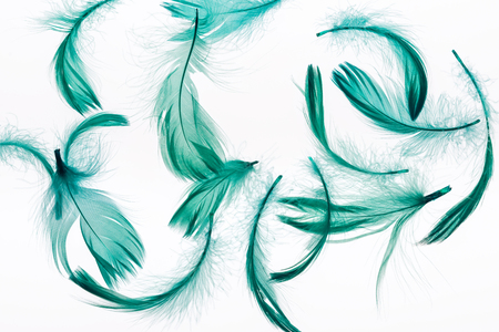 seamless background with green lightweight and soft feathers isolated on white