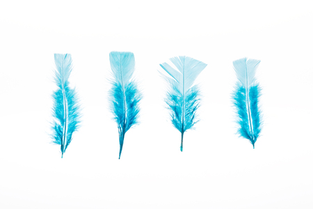 row of blue lightweight four feathers isolated on white