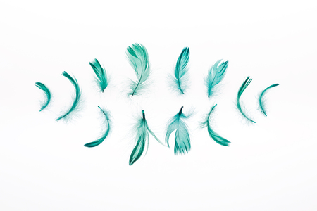 rows of green bright feathers isolated on white Stock Photo
