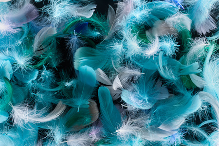 seamless background with bright blue, green and turquoise lightweight feathers isolated on black Stock Photo