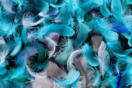 seamless background with blue, green and turquoise soft feathers isolated on black