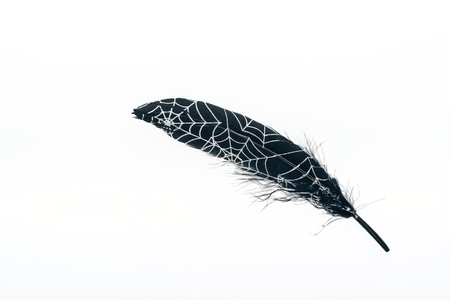 painted black lightweight feather with spiderweb isolated on white