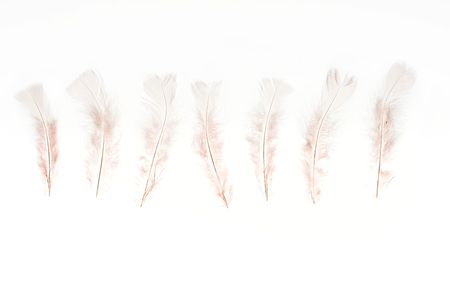 row of beige lightweight feathers isolated on white