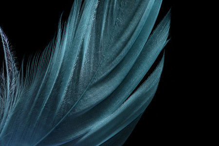 close up of green lightweight textured feather isolated on black Фото со стока