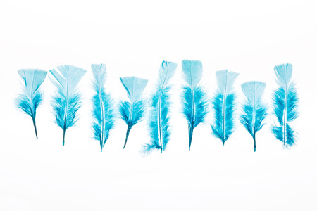row of blue lightweight feathers isolated on white