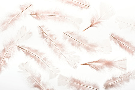 seamless background with beige lightweight feathers isolated on white Stock Photo
