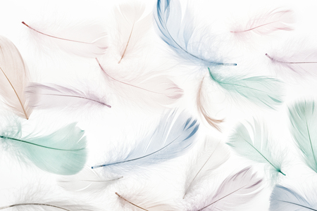 seamless background with multicolored soft feathers isolated on white