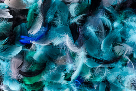 seamless background with bright blue, green and turquoise colorful feathers isolated on black