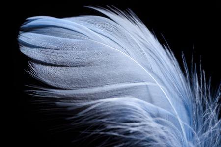 Cerca de pluma con textura ligera aislado en negro Foto de archivo