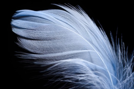 close up of lightweight textured feather isolated on black