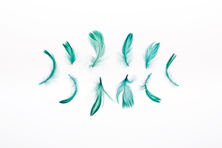 rows of green soft feathers isolated on white