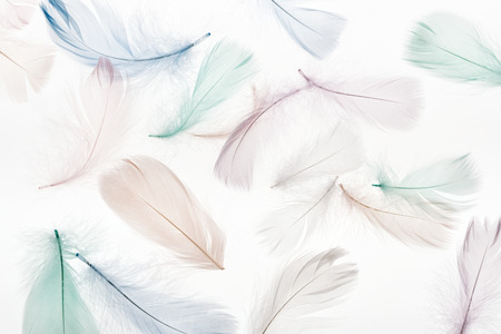 seamless background with light beige, green and blue feathers isolated on white