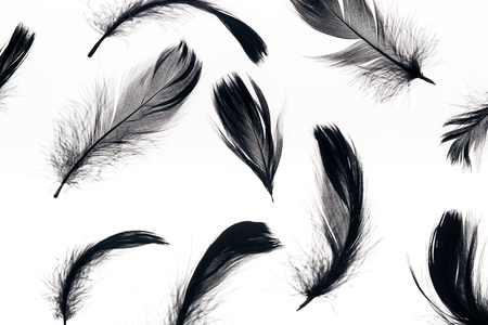 seamless background with black soft and lightweight feathers isolated on white