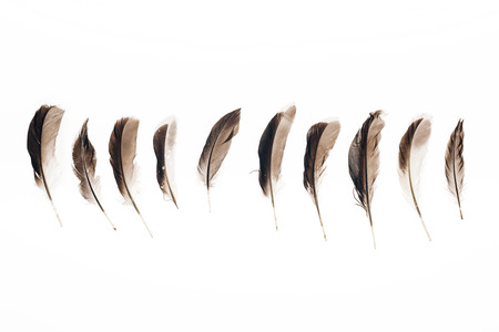 set of brown lightweight feathers in row isolated on white