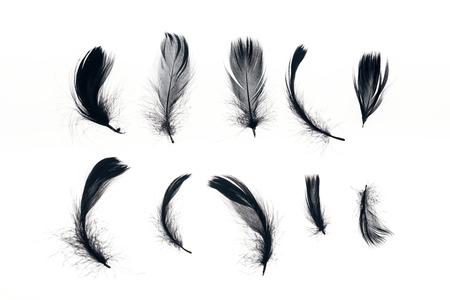 rangées de plumes légères noires isolées sur blanc