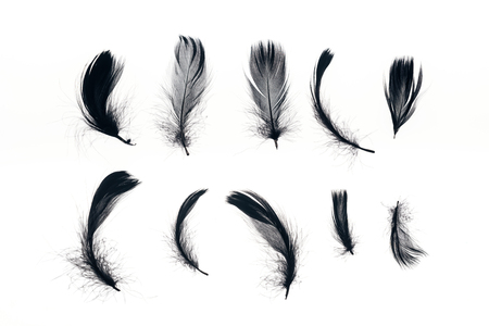 rows of black lightweight feathers isolated on white