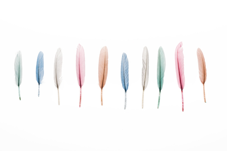row of multicolored lightweight feathers isolated on white Stock Photo