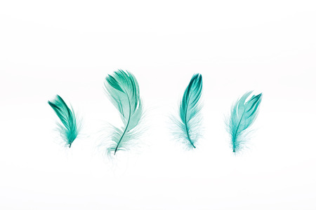 green lightweight four feathers isolated on white