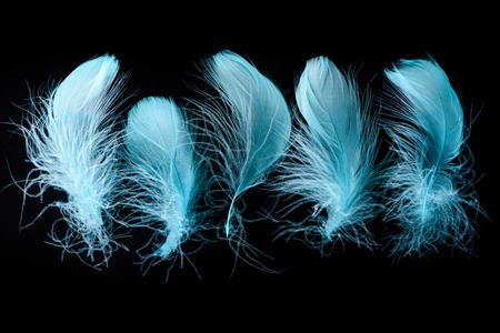 set of blue bright textured and lightweight feathers isolated on black