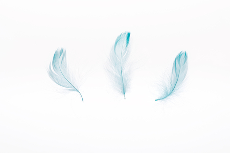 blue lightweight three feathers isolated on white