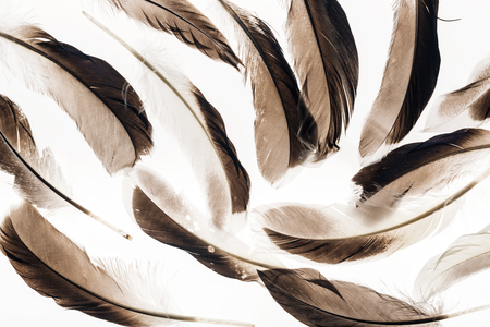 seamless background with brown lightweight feathers isolated on white Stock Photo