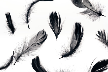 seamless background with black soft feathers isolated on white Stock Photo