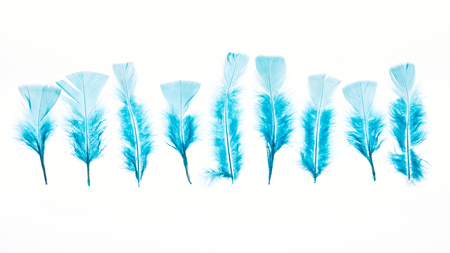 blue lightweight bright and soft feathers isolated on white