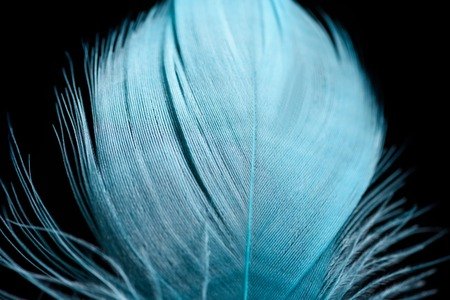 close up of soft light blue textured feather isolated on black