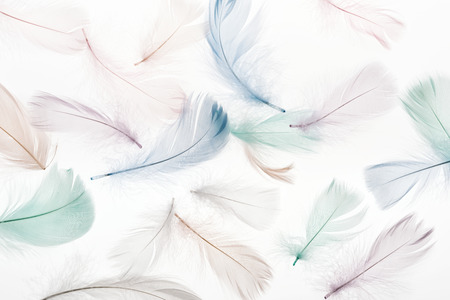 seamless background with multicolored fluffy feathers isolated on white Standard-Bild