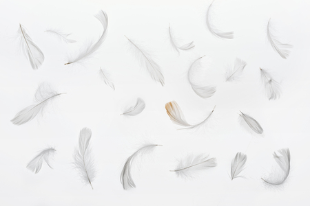 seamless background with grey faint feathers isolated on white Stock Photo