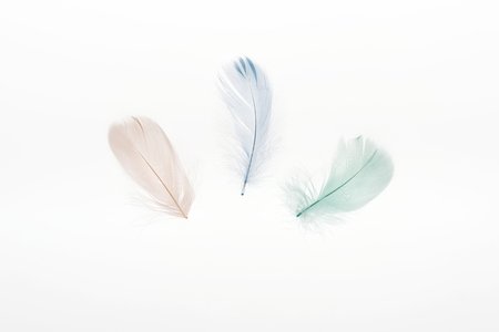 multicolored light beige, green and blue feathers isolated on white