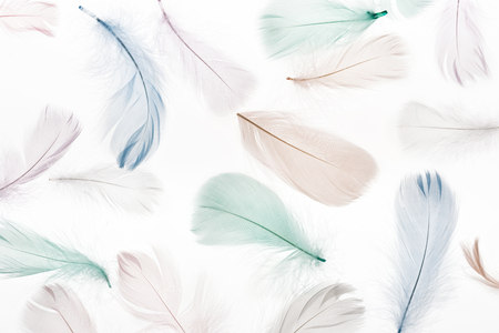 seamless background with multicolored feathers isolated on white