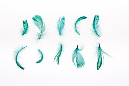 rows of green bright lightweight feathers isolated on white